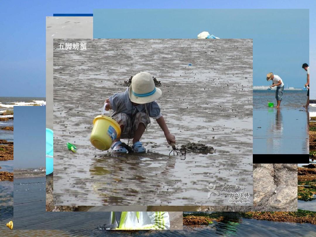 (演唱)贝壳之歌PPT课件和教学设计(第二课时)的第2张ppt图片预览