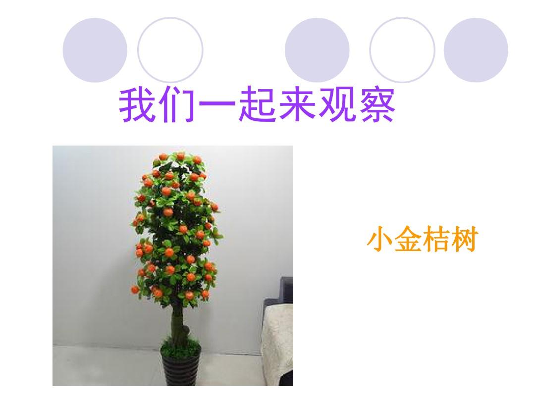 2.观察一棵植物PPT课件和教学内容分析的第6张ppt图片预览