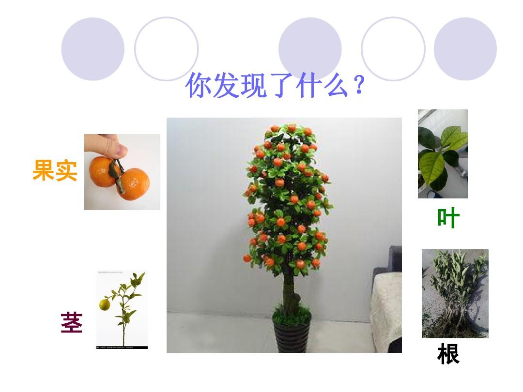 2.观察一棵植物PPT课件和教学内容分析的第7张ppt图片预览