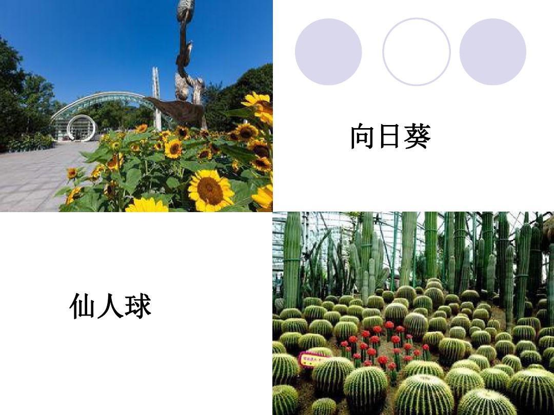 2.观察一棵植物PPT课件和教学内容分析的第3张ppt图片预览