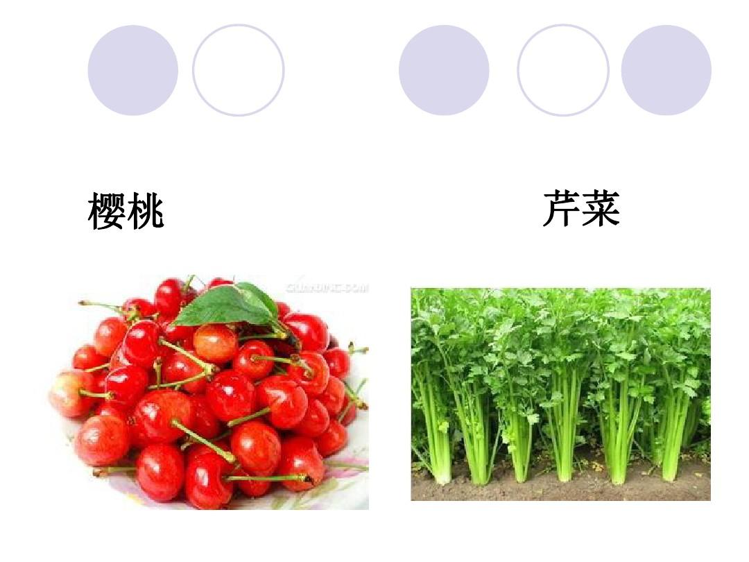 2.观察一棵植物PPT课件和教学内容分析的第5张ppt图片预览