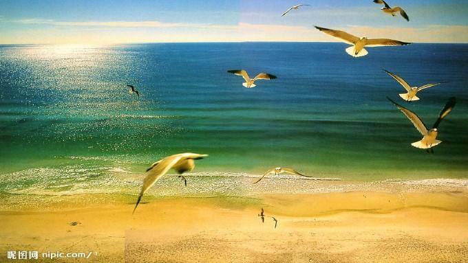 (演唱)贝壳之歌PPT课件教学实录的第4张ppt图片预览