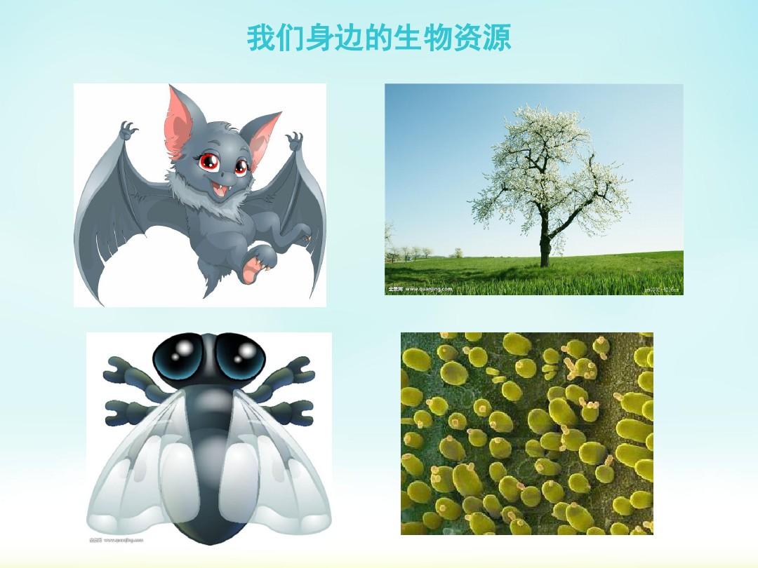 第3节 关注生物�…PPT课件和教案设计(一等奖)的第4张ppt图片预览