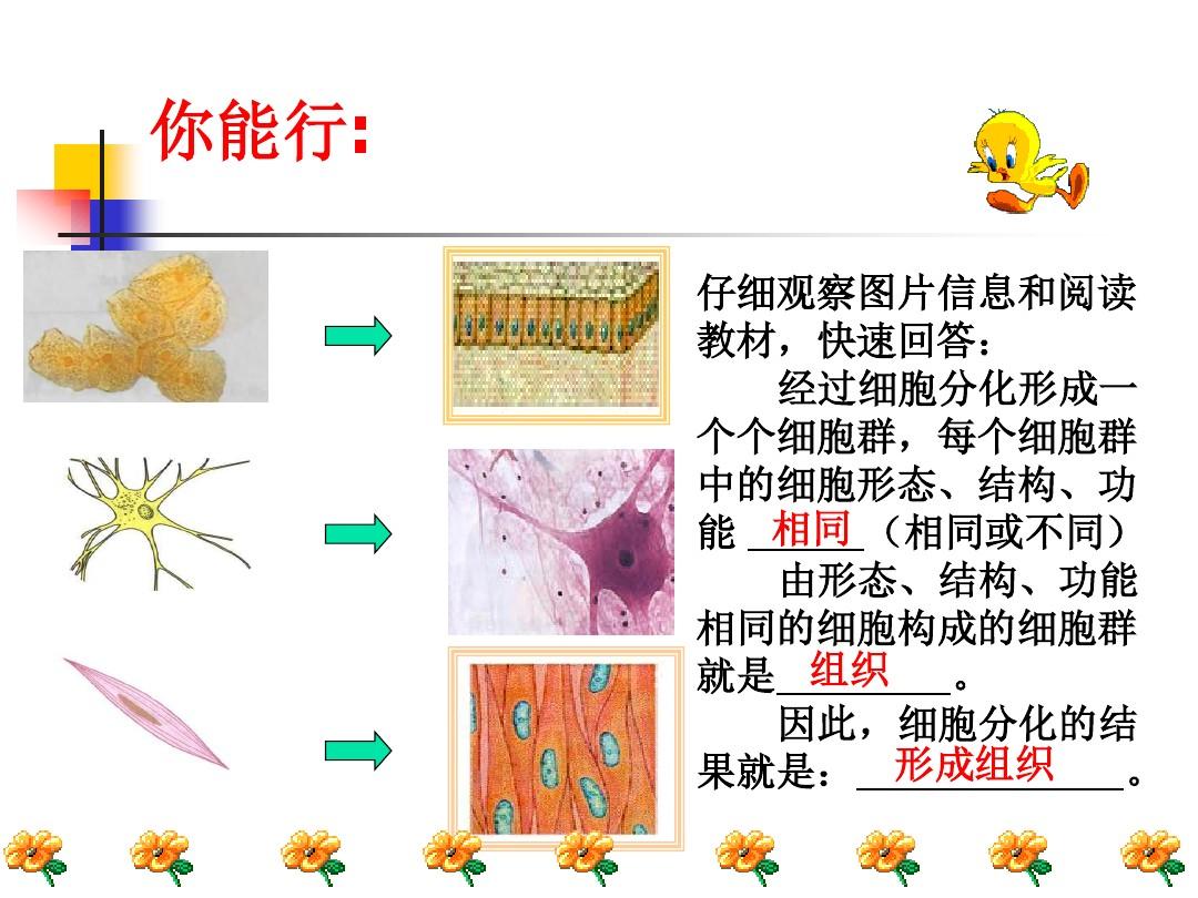第一节 基因控制生物的性状PPT课件和教学设计(第一课时)的第9张ppt图片预览