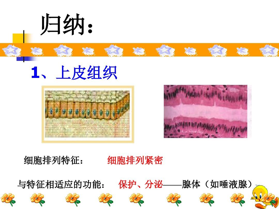 第一节 基因控制生物的性状PPT课件和教学设计(第一课时)的第11张ppt图片预览