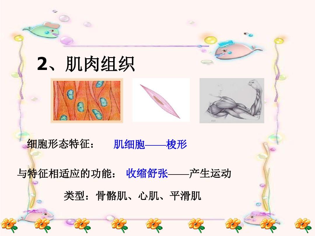 第一节 基因控制生物的性状PPT课件和教学设计(第一课时)的第12张ppt图片预览