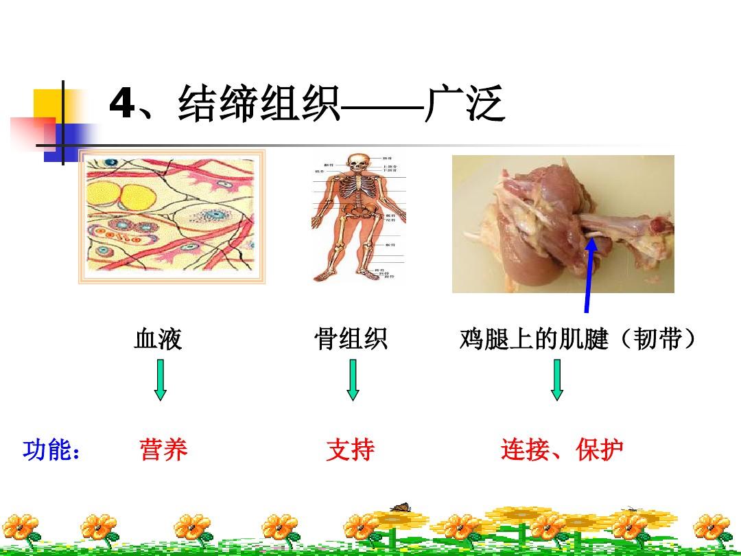 第一节 基因控制生物的性状PPT课件和教学设计(第一课时)的第14张ppt图片预览