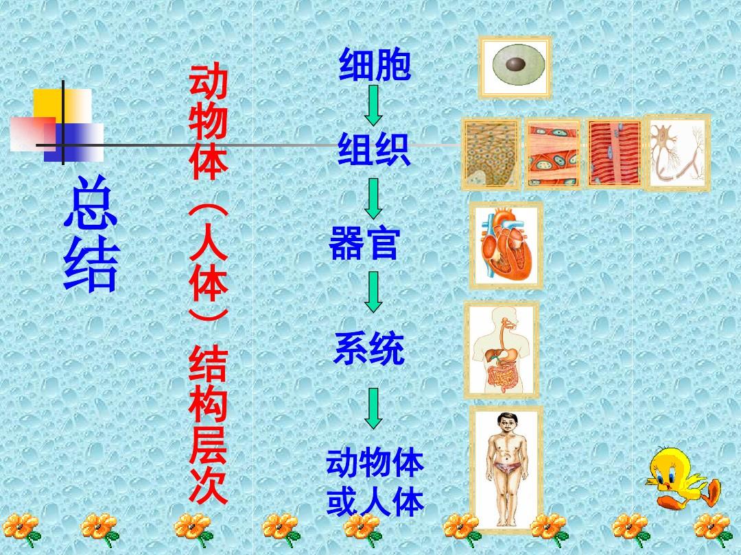 第一节 基因控制生物的性状PPT课件和教学设计(第一课时)的第19张ppt图片预览