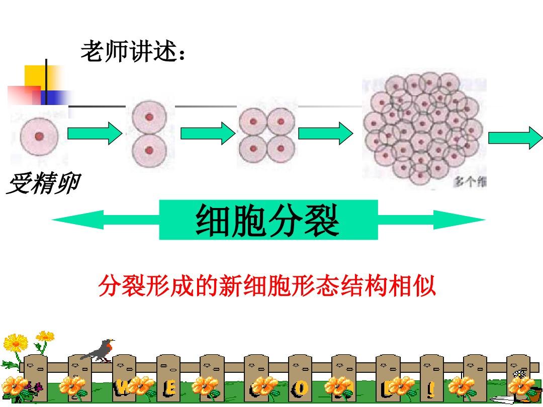第一节 基因控制生物的性状PPT课件和教学设计(第一课时)的第6张ppt图片预览